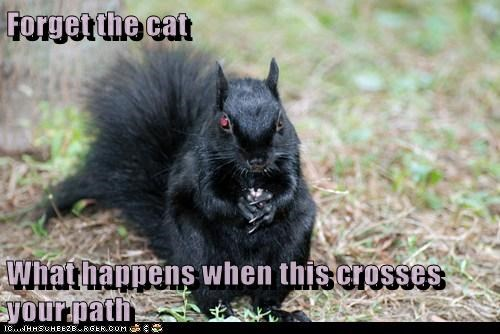 black cats,squirrels,superstition