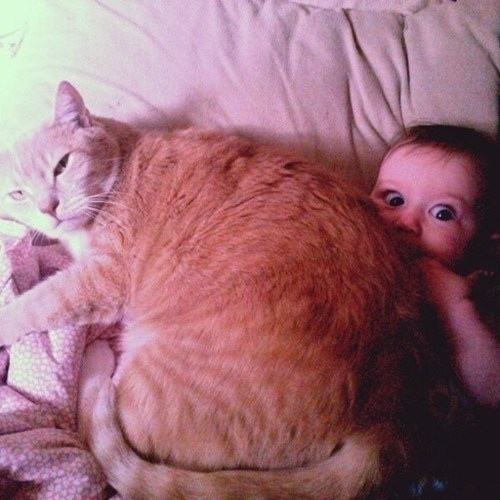 suffocation kids Cats funny - 7548575488