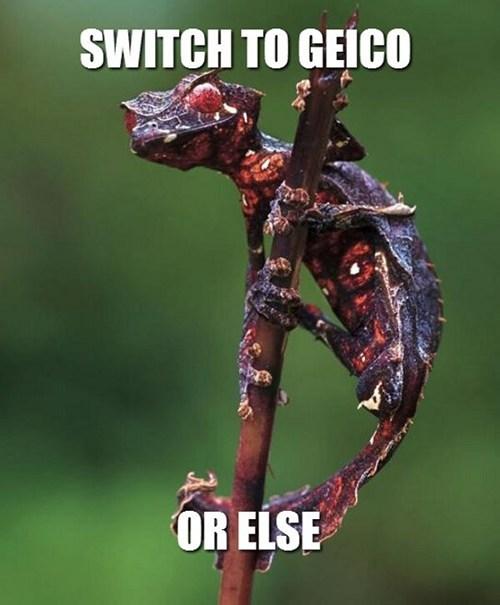 geckos wtf GEICO funny - 7548677632