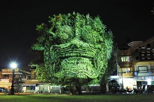 This Bush Has a Face