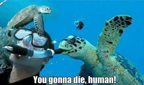 evil,turtle,funny