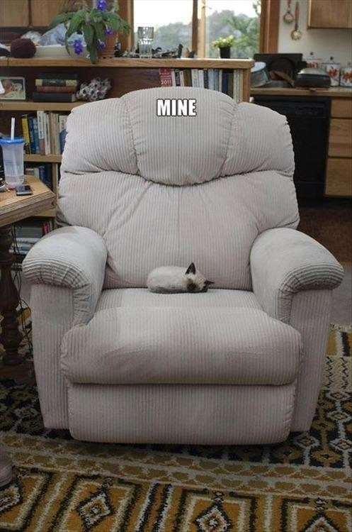 chair mine kitty funny national cat day 2013 - 7548995328