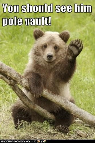 bears,cute,waving,pole vault
