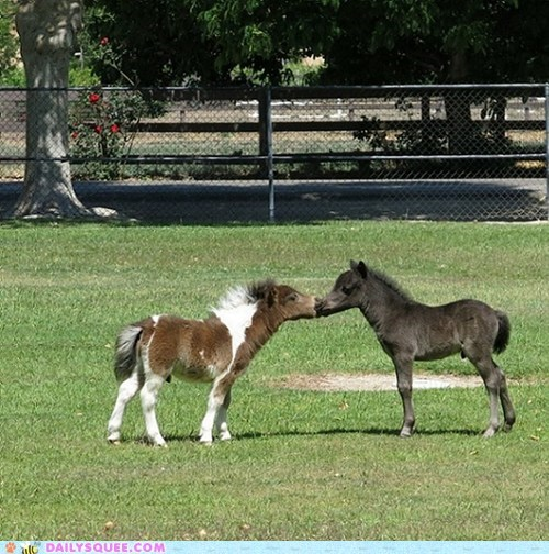 KISS miniature love horses - 7549484032
