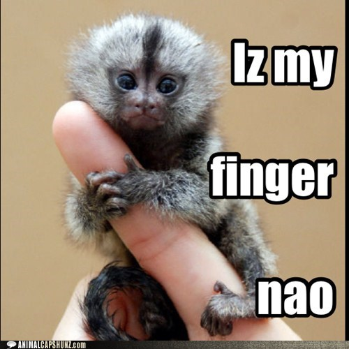 monkeys tiny cute finger