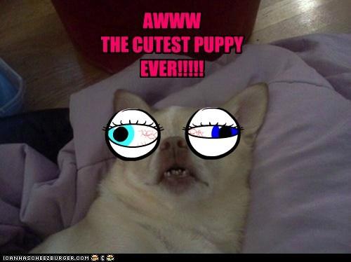 AWWW THE CUTEST PUPPY EVER!!!!!