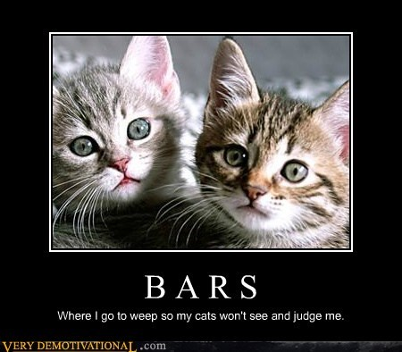 bars,jerks,Cats,judgmental