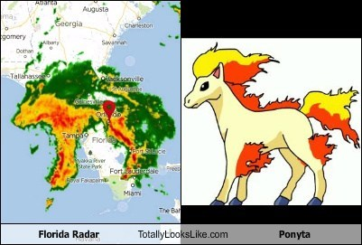 Pokémon ponyta florida totally looks like funny - 7552325376