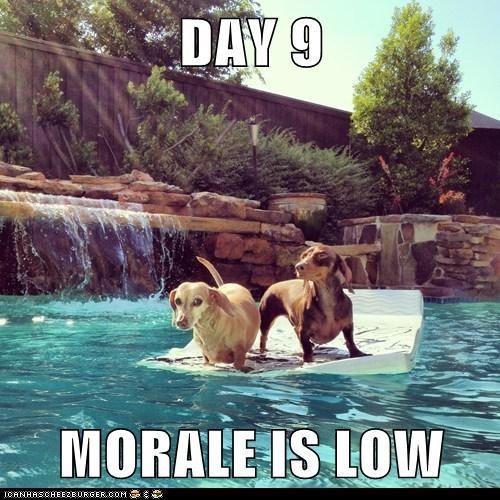 morale,funny,rescue
