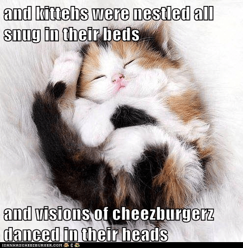and kittehs were nestled all snug in their beds  and visions of cheezburgerz danced in their heads