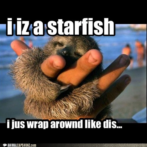 starfish,cute,sloths,slow