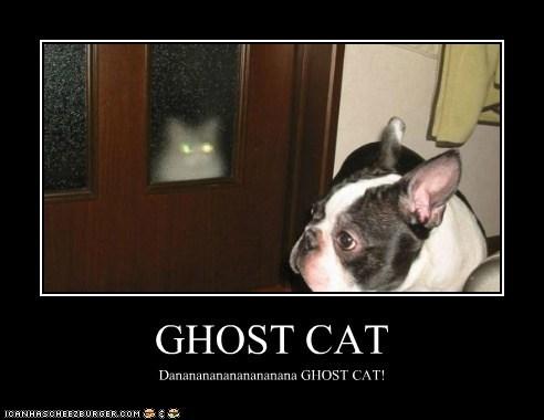 GHOST CAT Dananananananananana GHOST CAT!