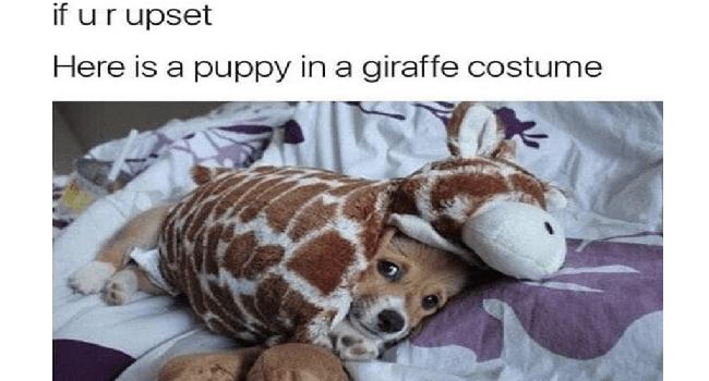 dog memes funny memes Memes doggo funny dogs doggo memes - 7552773