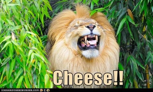 cheese lion funny smile - 7552932096