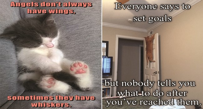 cute and funny cat memes