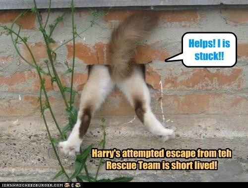 Harry's attempted escape from teh Rescue Team is short lived! Helps! I is stuck!!