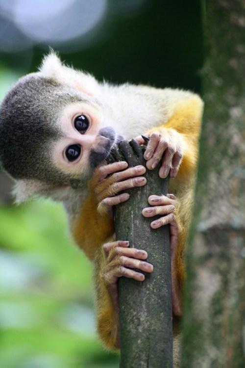 silly monkey - 7555178752