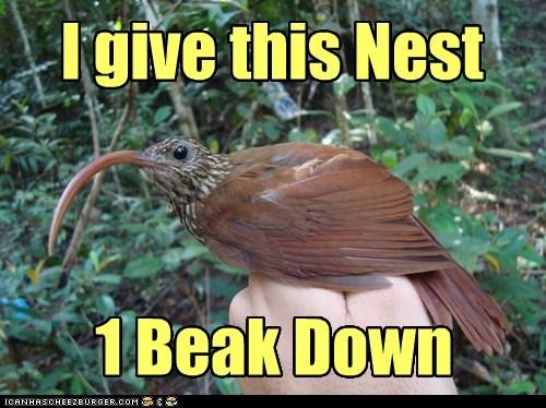 nest roost beak funny - 7555745792