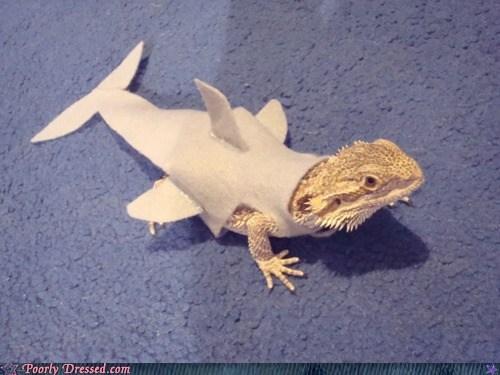 lizards sharks pet costumes funny - 7556002304
