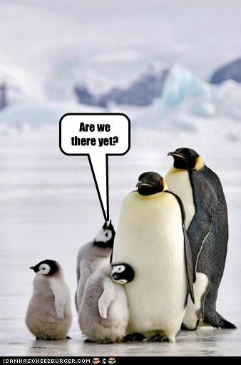 animal kingdom kids penguins road trips funny - 7556208384