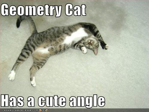 Geometry Cat  Has a cute angle