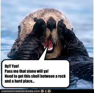 Oy!! You! Pass me that stone will ya! Need to get this shell between a rock and a hard place...