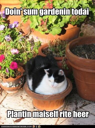 gardening funny planting - 7556877568
