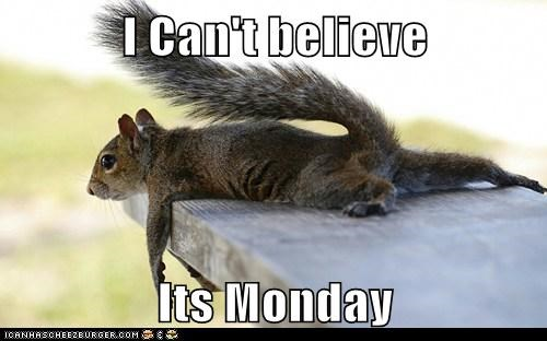 squirrel mondays funny