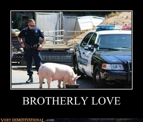 cops wtf pig funny - 7557668864