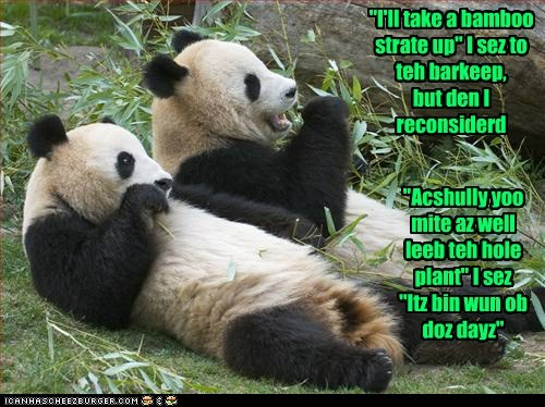 bar panda koala barkeep funny - 7558366720