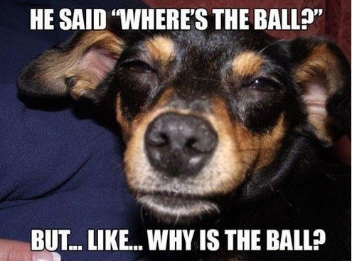 fetch,high,mind blown,ball,funny