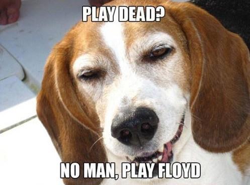 play dead,stoner,floyd
