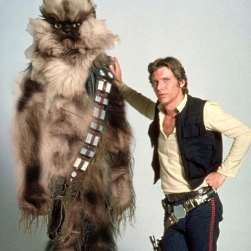 star wars,colonel meow,chewbacca,photoshop,funny