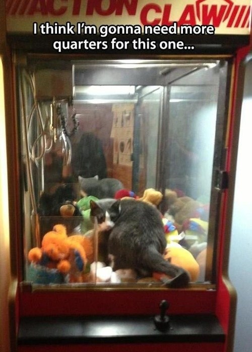claw machine,cat,life-like,funny