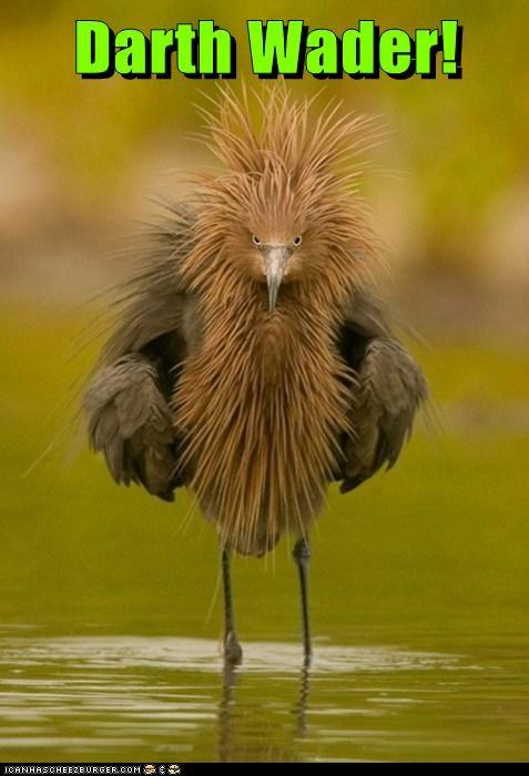 wading,bird,funny,darth vader