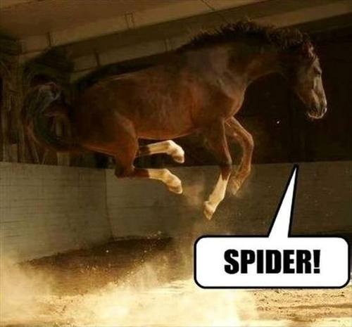 jump,spider,funny,horse