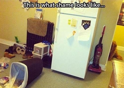 dog shamming funny guilty - 7561581056