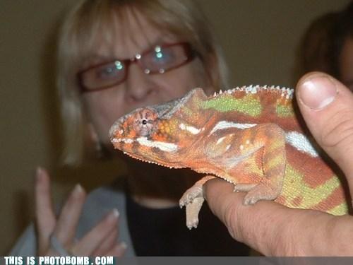 photobomb,reptile,funny