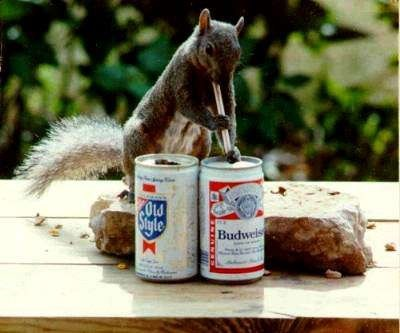 beer crunk critters squirrel funny - 7562388480