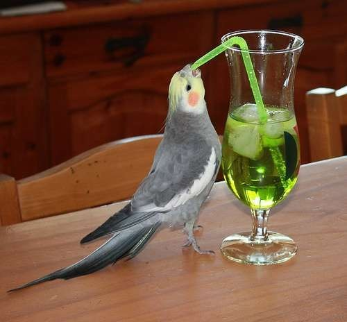 Get Your Bird Out of My Booze