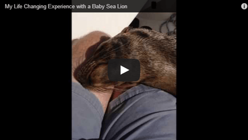baby,seal,cute,Video,people pets