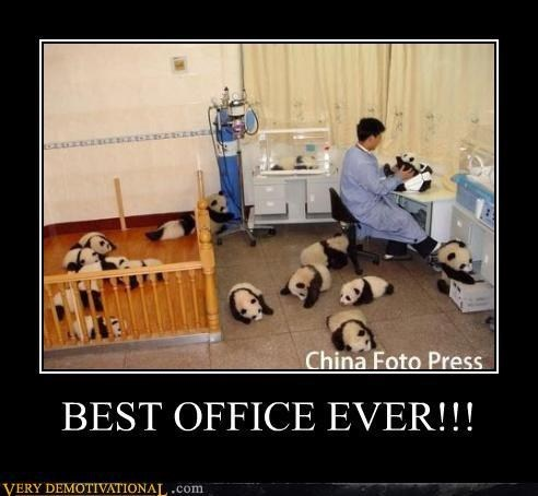 China work awesome panda
