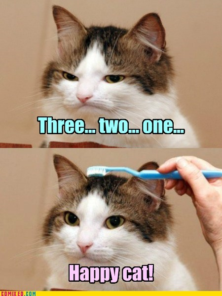 emotions,Cats,funny,toothbrush
