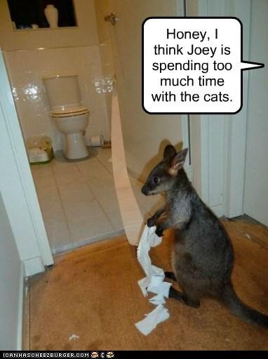 kangaroo toilet paper litter box Cats funny - 7562683648
