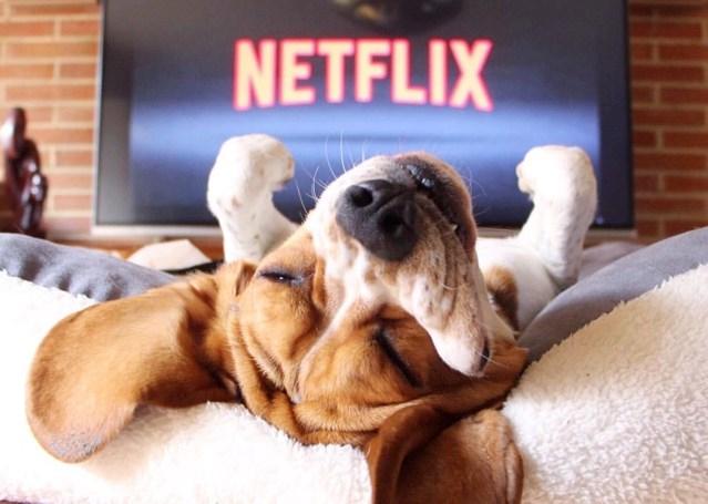 pets movies netflix and chill Popcorn netflix - 7563269