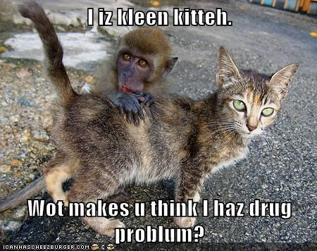 cat,drugs,monkey on your back,funny