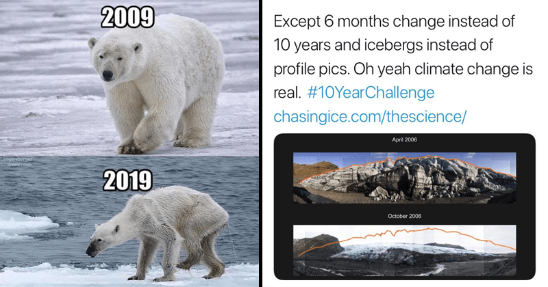 #10yearchallenge, 10 year challenge, social media, facebook, science, engvironmental scence, animals, polar bears.