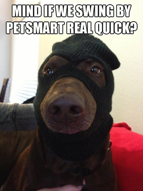 dogs pets funny thief - 7565051392