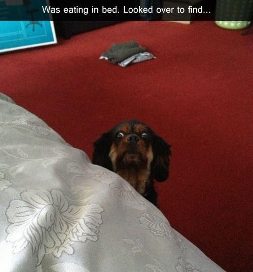 bed begging food funny - 7565167104