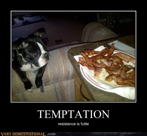 breakfast delicious dogs funny bacon - 7565188608